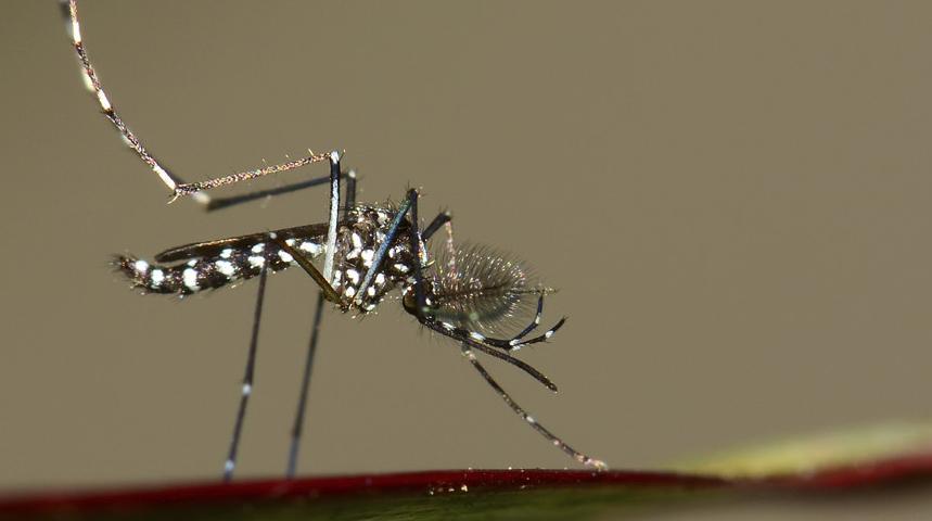 8 consejos para protegerte del virus zika